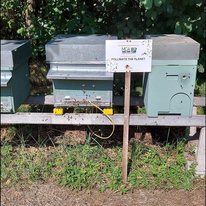 Foto della tecnologia installata dall'apicoltore